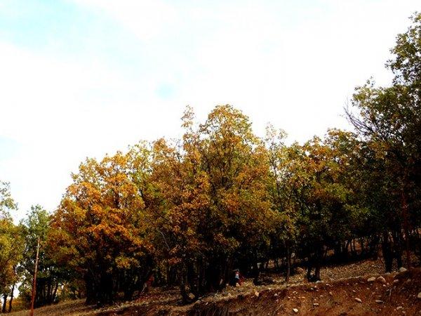 زیباییهای پاییز