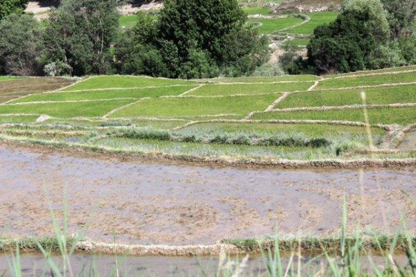 رنج برنج  وسود خانواده